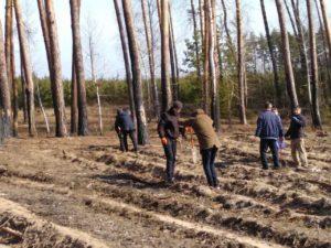 Рабочий процесс в лесхозе